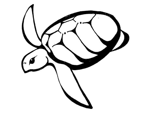 Hawaiian Turtle Outline Delicate Clipart Library