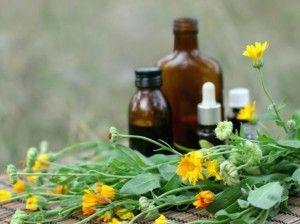 La cura de la diabetes aún no se conoce, pero entre los remedios caseros para la diabetes se están incluyendo plantas como la Stevia procedente de países...
