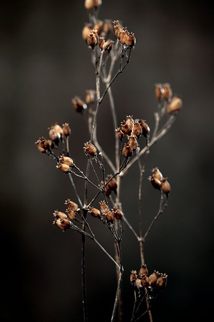flower impressions  photo by Óscar Almeida