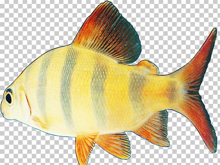 Fish Png Animated Film Bony Fish Color Coral Reef Fish Download Fish Png Colorful Fish