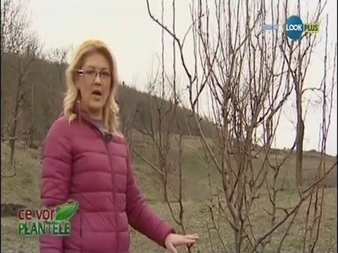 Ce vor plantele - Taierile pomilor fructiferi - YouTube