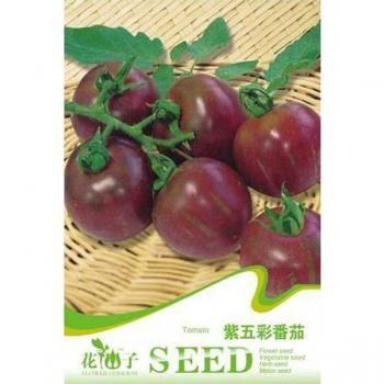 20PCS Mini Purple Colorful Tomato Potting Seeds
