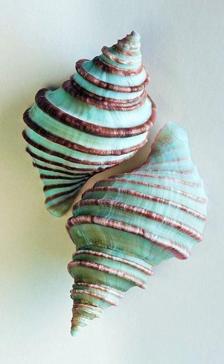 seashells - aqua-mint-brown-sand