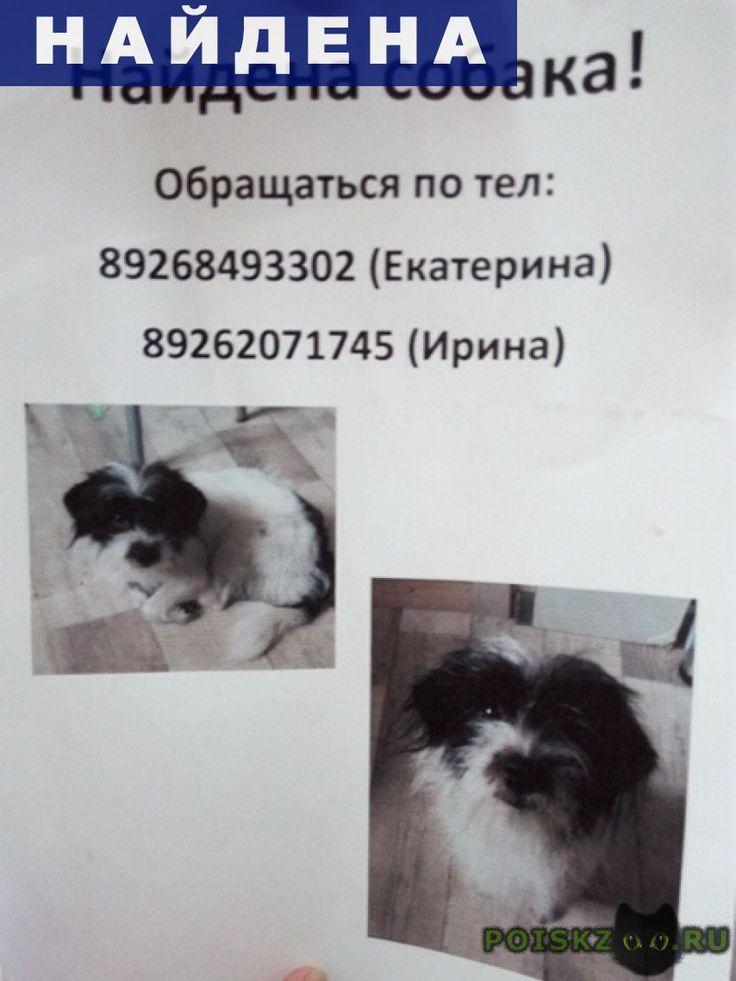 Найдена собака в посёлке снегири г.Истра http://poiskzoo.ru/board/read25316.html  POISKZOO.RU/25316 В посёлке Снегири .. июля .. года найдена собака, предположительно Микки-терьер или скай-терьер, черно-белого окраса, ласковая, домашняя.   РЕПОСТ! @POISKZOO2 #POISKZOO.RU #Найдена #собака #Найдена_собака #НайденаСобака #Истра