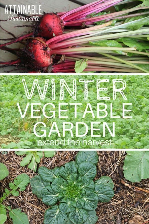 Planting Cool Season Vegetables Can Allow You To Harvest Fresh Produce Into The Winter In Milder Climates Winter Gardening Often Means Utilizing A Green House Indoor Vegetable Gardening Growing Winter Vegetables