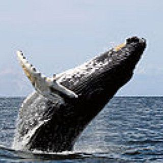 Who knew whale-watching could be so amazing? Find a friend, list it, live it together -> https://www.bucketlist.net/bm1343/