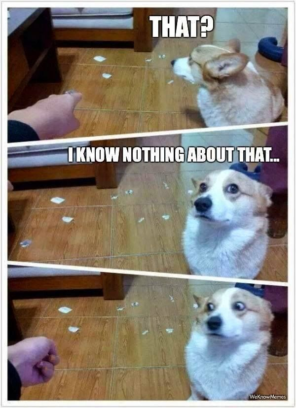 Funny Guilty Looking Dog