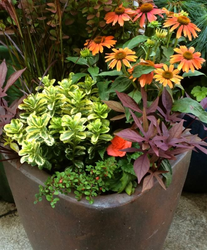 17 Best Ideas About Gardening On Pinterest: 17 Best Images About #Container #Gardening Ideas On