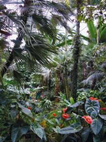 10 Things to See in Frankfurt (Besides the Airport): Palmengarten - the Botanical Gardens