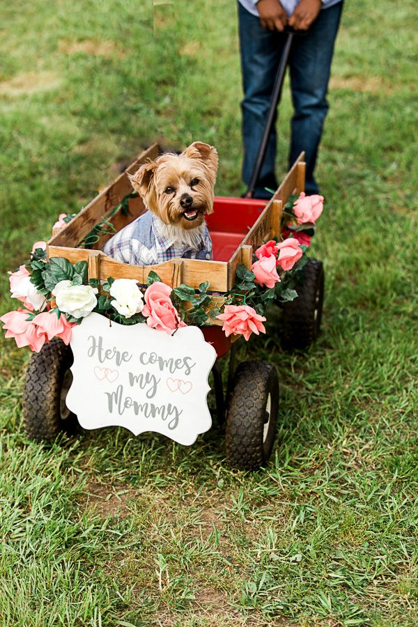 Dog in wedding ceremony. North Texas Photographer.
