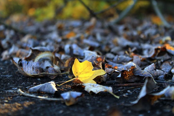 Hope shows up among autumn leaves...