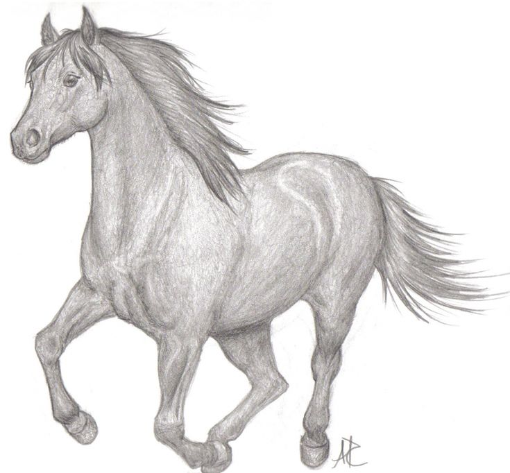 Beautiful And Easy Drawings To Draw Of Horses - Drawing Art Library