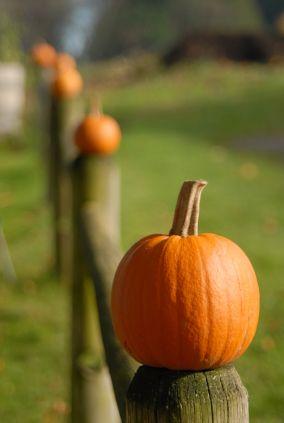 Fence post pumpkins.