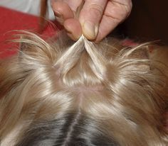 Dog On Top - Preparation of the TopKnot