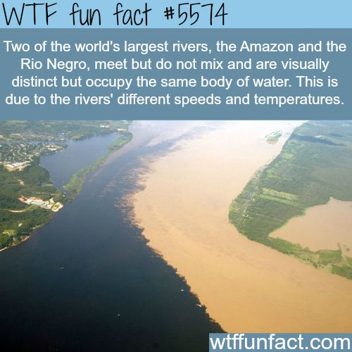 : When the Amazon river and Rio Negro meet - WTF fun facts | April 4 2016 at 06:04AM | http://www.letstfact.com