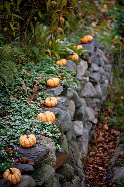 Memories of my dad, every Fall he'd put full size pumpkins along his stone wall. These mini-pumpkin gourds are really cute too.