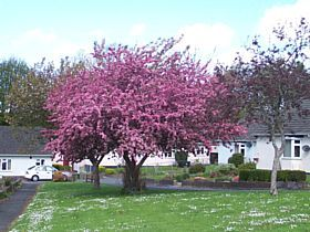 Ivybridge - Spring in Ivybridge © Esin Forster