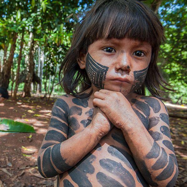 deforestation in brazil essay