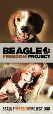 The Beagle Freedom Project is a mission to rescue beagles used in animal experimentation in research laboratories and give them a chance at life in a loving forever home.
