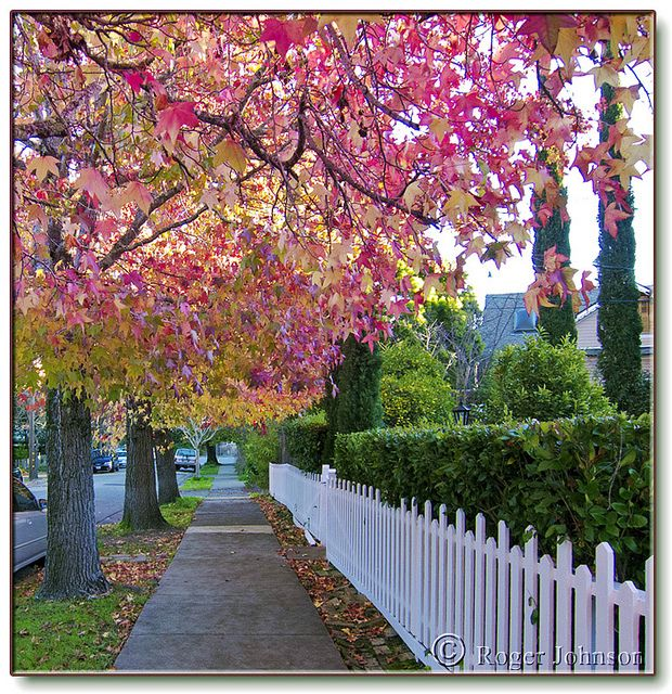 white picket fence - Google Search