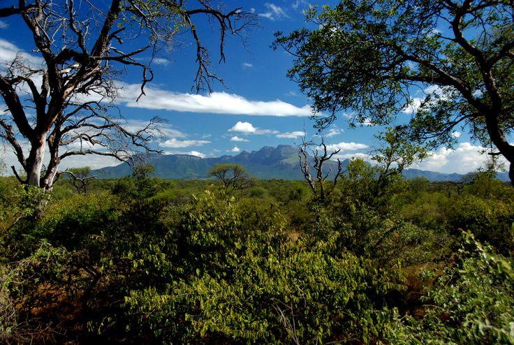 Green bushveld and a fantastic view on the Drakensbergen from Zandspruit Estate. www.villablaaskans.co.za