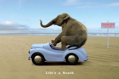 Life's a Beach (Elephant Driving Car) Art Poster Print: $5.57