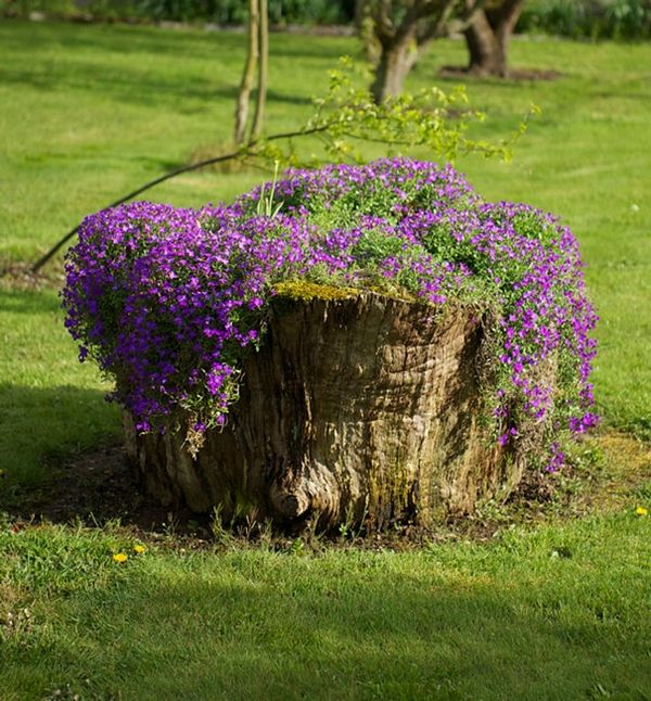 If you have an old tree stump in your garden, it doesn't have to be an eyesore. With just a few simple steps, they can be turned into gorgeous rustic planters. All you need to do is hollow out the stump, fill it with soil or compost, add plants of your choosing, and voila! Whether or not the stump is still rooted in the ground, this method works a treat. Check it out!