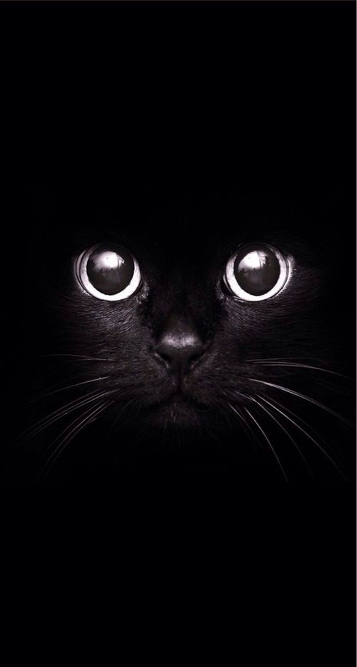 """I wish I could write as mysterious as a cat."" - Edgar Allan Poe"