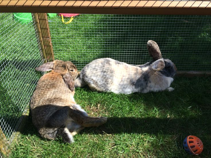 Hop and flopsy lying down