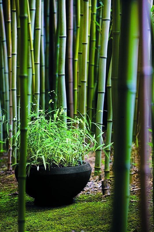 45 best bamboo art images on Pinterest   Chinese art ...