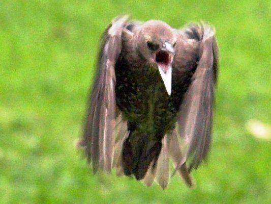 Scary bird attacks two women; one hospitalized - http://www.ghanatoghana.com/scary-bird-attacks-two-women-one-hospitalized/