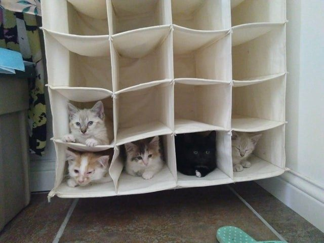 15 Cat Posts From This Week That Are Cute As Heck Cat Post Cute