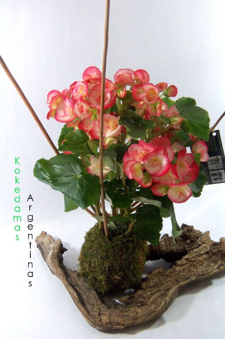 475 best Kokedama images on Pinterest | Gardening, Plants and ...