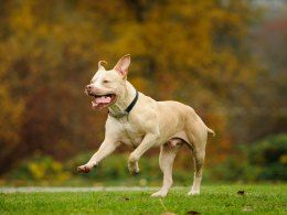The four dog breeds banned within the UK | Pets4Homes