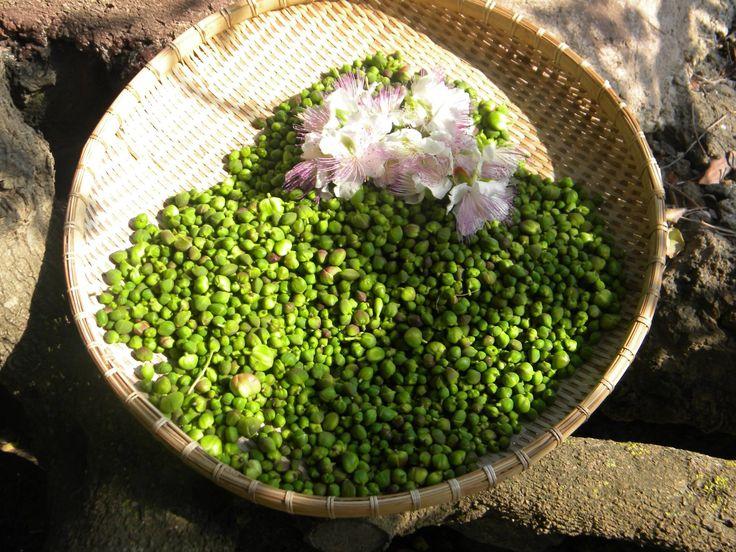 Comazera agricoltura montana bio