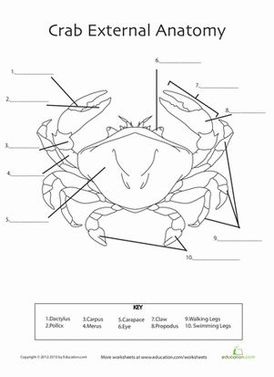 Printables Marine Biology Worksheets 1000 images about marine bioligist on pinterest its always and fifth grade life science worksheets crab anatomy teaching biologyzoology