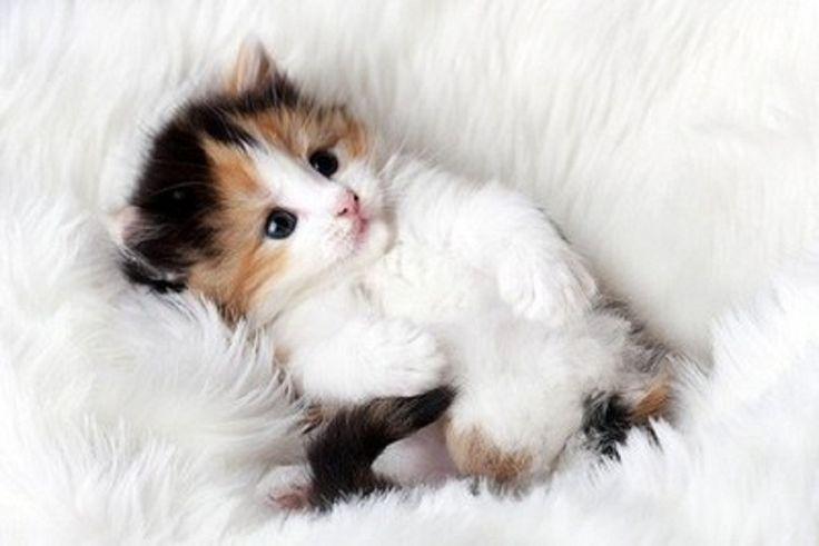 Roztomilé mačiatko ❤️❤️