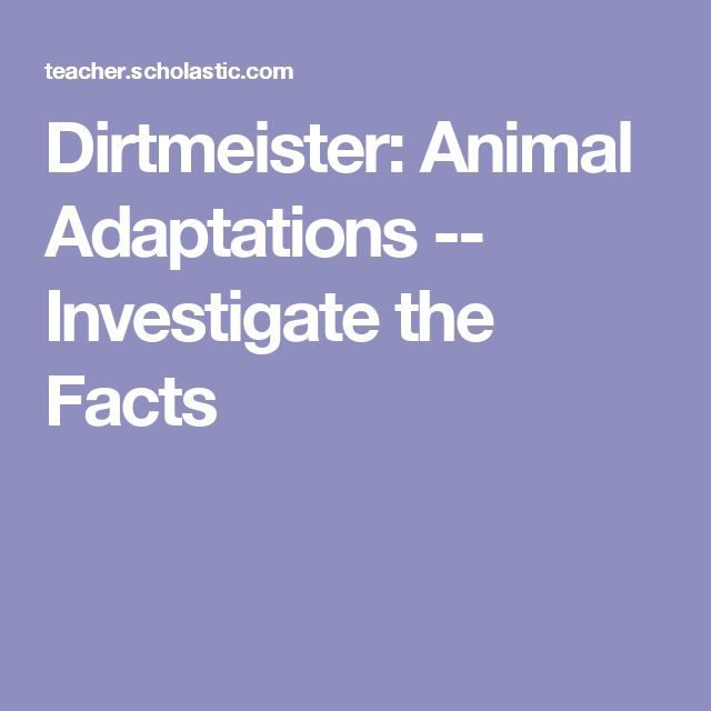 Dirtmeister: Animal Adaptations -- Investigate the Facts