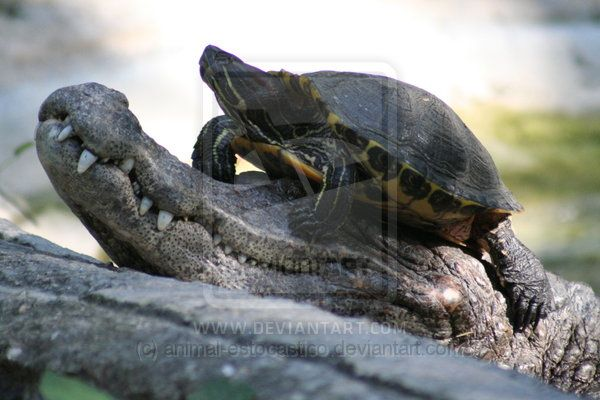 belizean animals | guess who by animal estocastico photography animals plants nature ...
