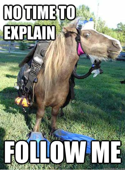 Horse memes about Spring - Google Search