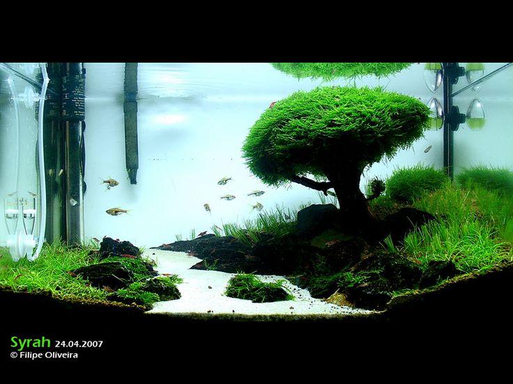 Iwagumi - Aquascaping 4 Fish Pinterest