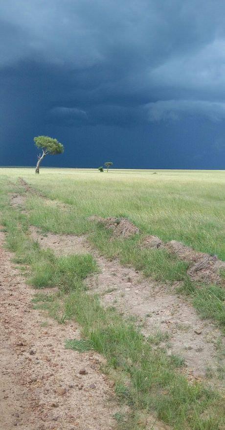 Kenya is beautiful (Masai Mara National Park)