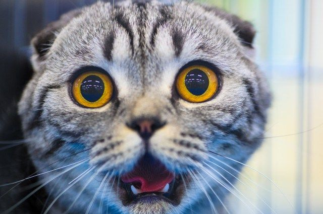 cat cucumber Some Top Unusual Cat Breeds on Earth