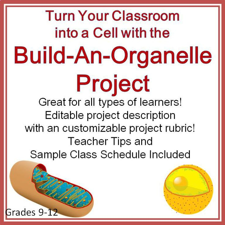 103 best biology images on pinterest life science physical cell organelle project to turn your classroom into a cell fandeluxe Images