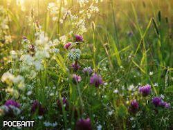 Ученые: съедобные цветы полезны для сердца