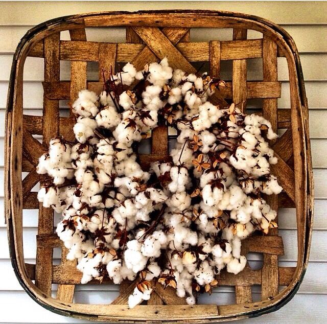 Raw cotton on a tobacco basket- perfection