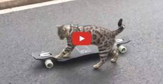 Boomer the Bengal Free Skates with Style - We Love Cats and Kittens