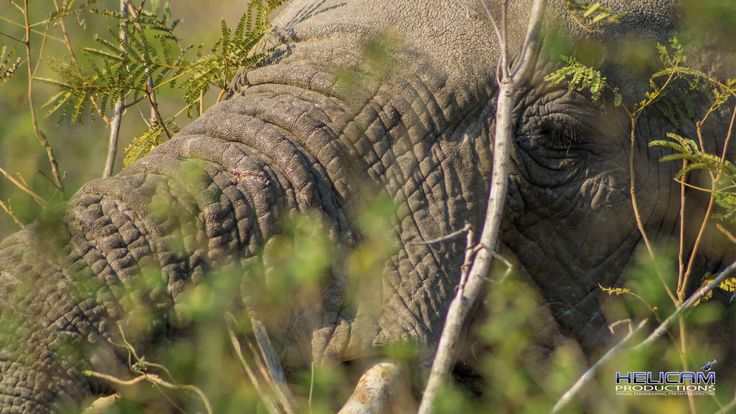 Close up of a South African Elephant