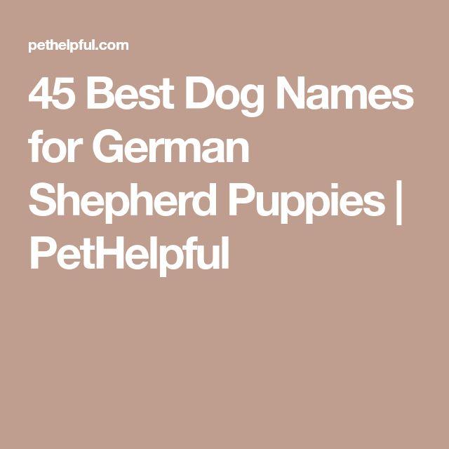 45 Best Dog Names For German Shepherd Puppies