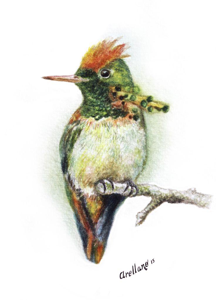Lophornis ornatus Técnica: auarela